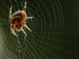 Perseverance: The Courage of a Spider